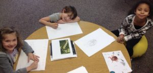 HFALA drawing insects (3)